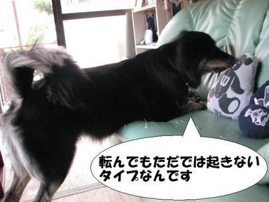 Img_01827korobi8oki