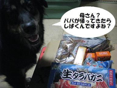 Img_0394shibakudo