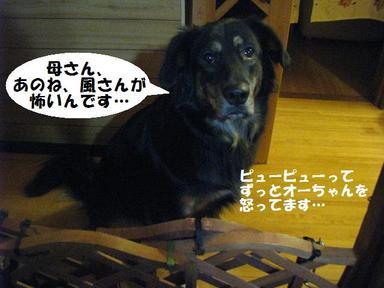 Img_0819kazekowai
