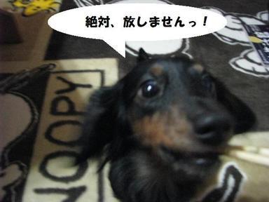 Img_1250hanashimasenzetai