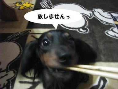 Img_1255hanashimasen