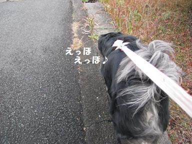 Img_1525yoizamashi1
