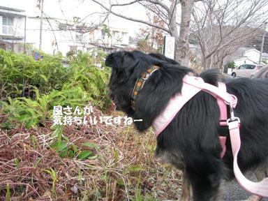 Img_1527yoizamashi4
