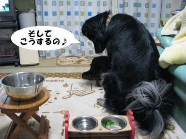 Img_2430kousuruno