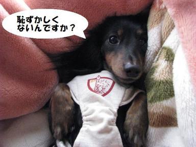 Img_2520hazukashi