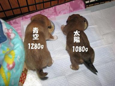 Img_2655aozorataiyouwt