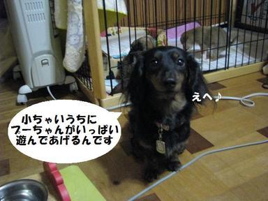 Img_2653chibispuri4