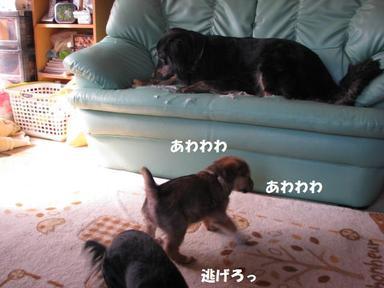 Img_5031awawawa