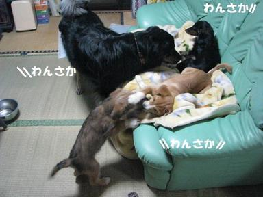 Img_5236wansakawansaka2