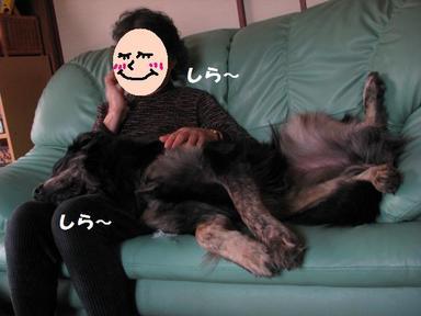 Img_5140ayashiibabaoli