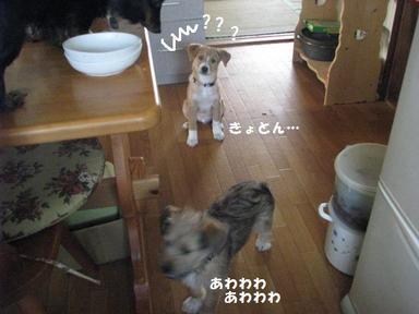 Img_5275hikuwa
