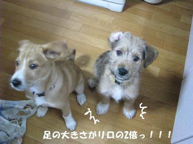 Img_5355ashiookiino