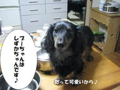 Img_5415shizukacyan