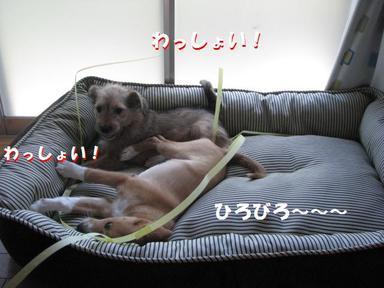 Img_5386hirobiro2