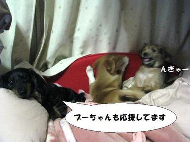 Img_5464puricharrironakayoshi
