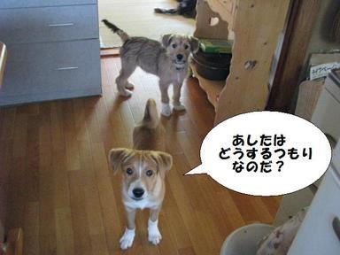 Img_5609ashitahadousuru