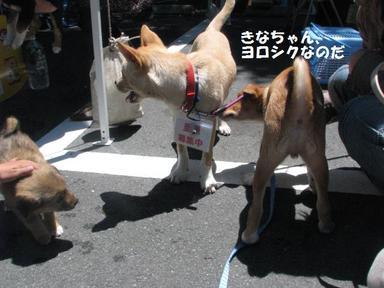 Img_5771rirokinako