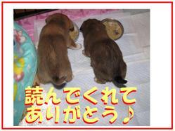 Img_2654thankskokoku