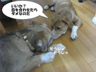 Img_5828kosokosobahashi