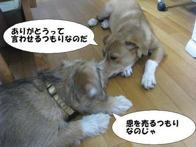 Img_5829kosokosobanashi2