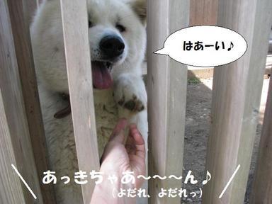 Img_6205akichan