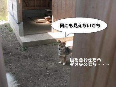 Img_6208chikamichan