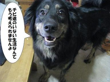 Img_6032chibinashiwaiya