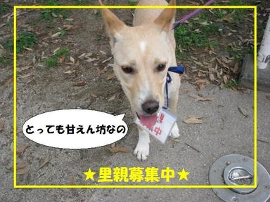 Img_6263kinachan