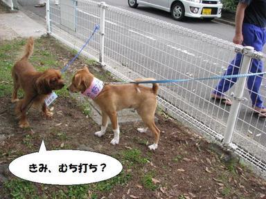 Img_6269muchiuchijanai