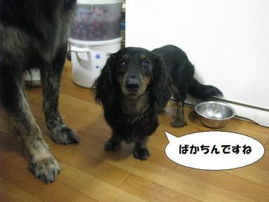 Img_6384puchanmookorimasuyo_3
