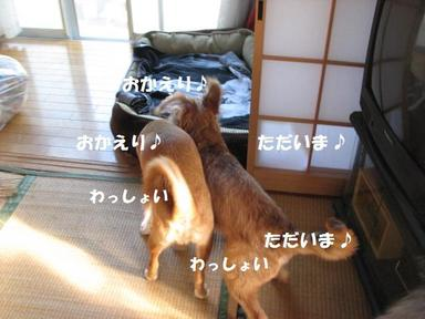Img_6535okaeritadaima