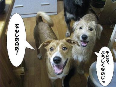 Img_6683yoroshikuchibita