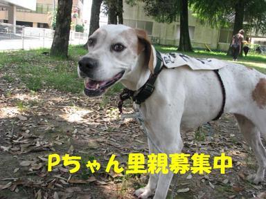 Img_6774pchan