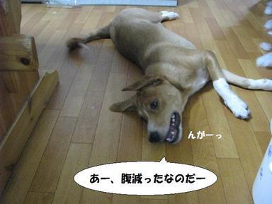 Img_6681haraheririro