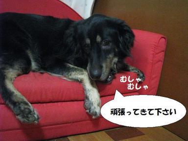 Img_6915ouenshimasu