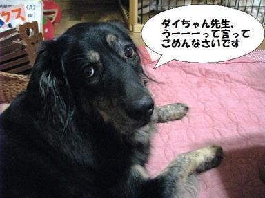Img_6591daichanoli