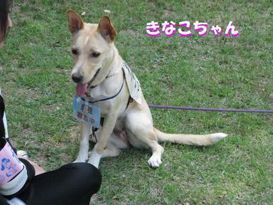 Img_6716happykinakochan