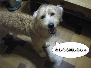 Img_7092ureshiinojachako_2