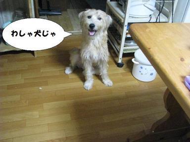 Img_7364im_a_dog