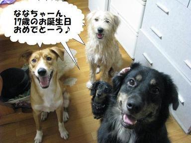 Img_7584daisukinanachan