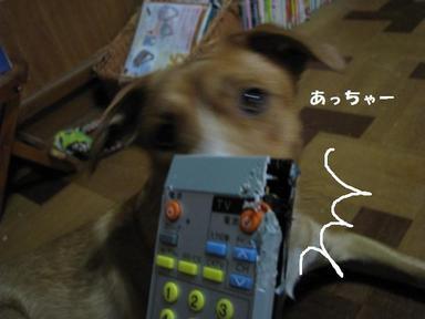 Img_7653rimokonga