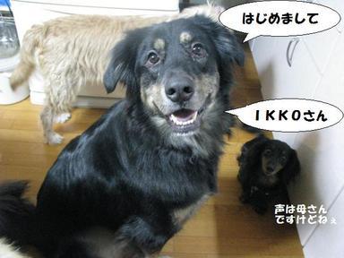 Img_8475donokuchika