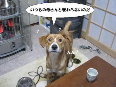Img_8682riro