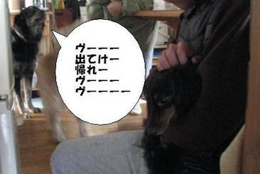 Img_8596ochanyamenasai