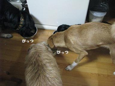 Img_8730gatsuishimatsu