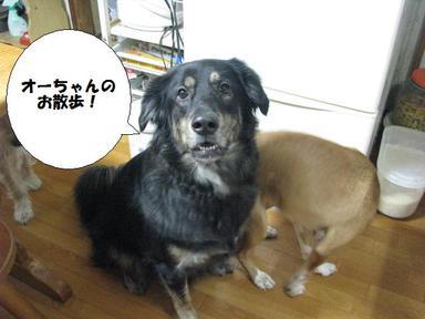 Img_8777occhanjanaiyo