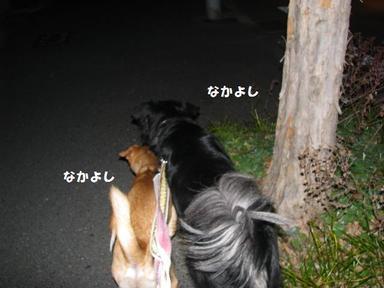 Img_8831nakayoshisanpo