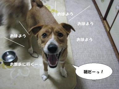 Img_9301osanpodaimaou