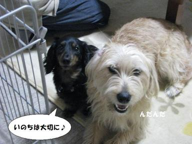 Img_9598inochiwataisetuni