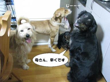 Img_9625gohanwamadaka